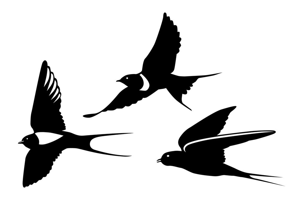 09swallows.jpg