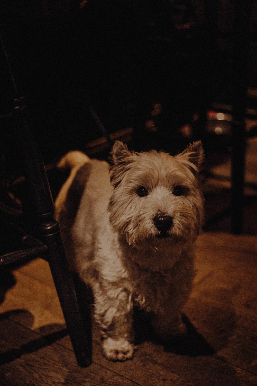 the boat inn dog.jpg