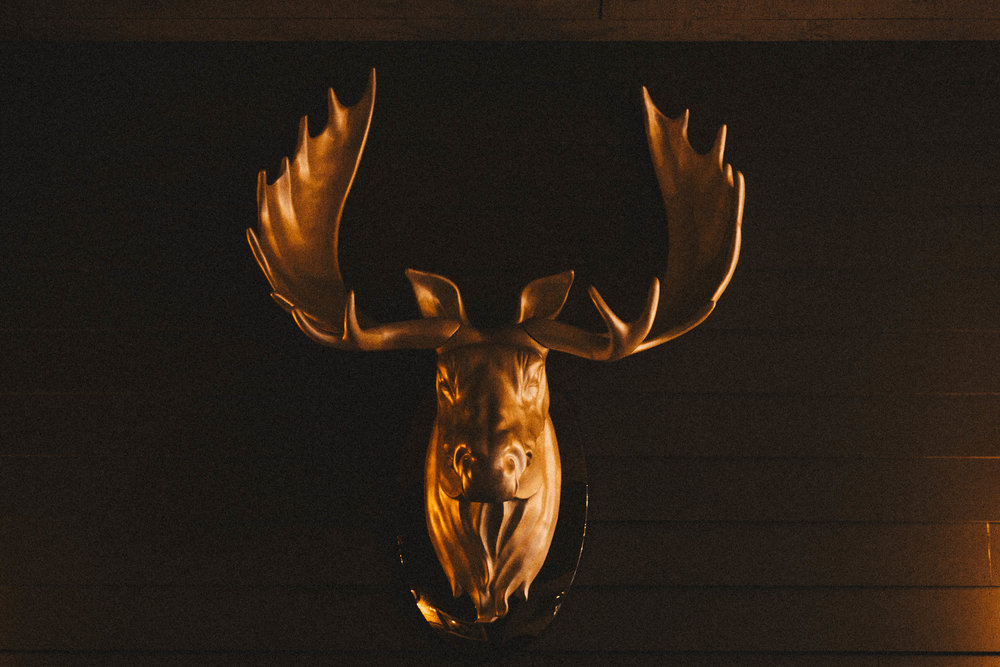 deer in cafe.jpg