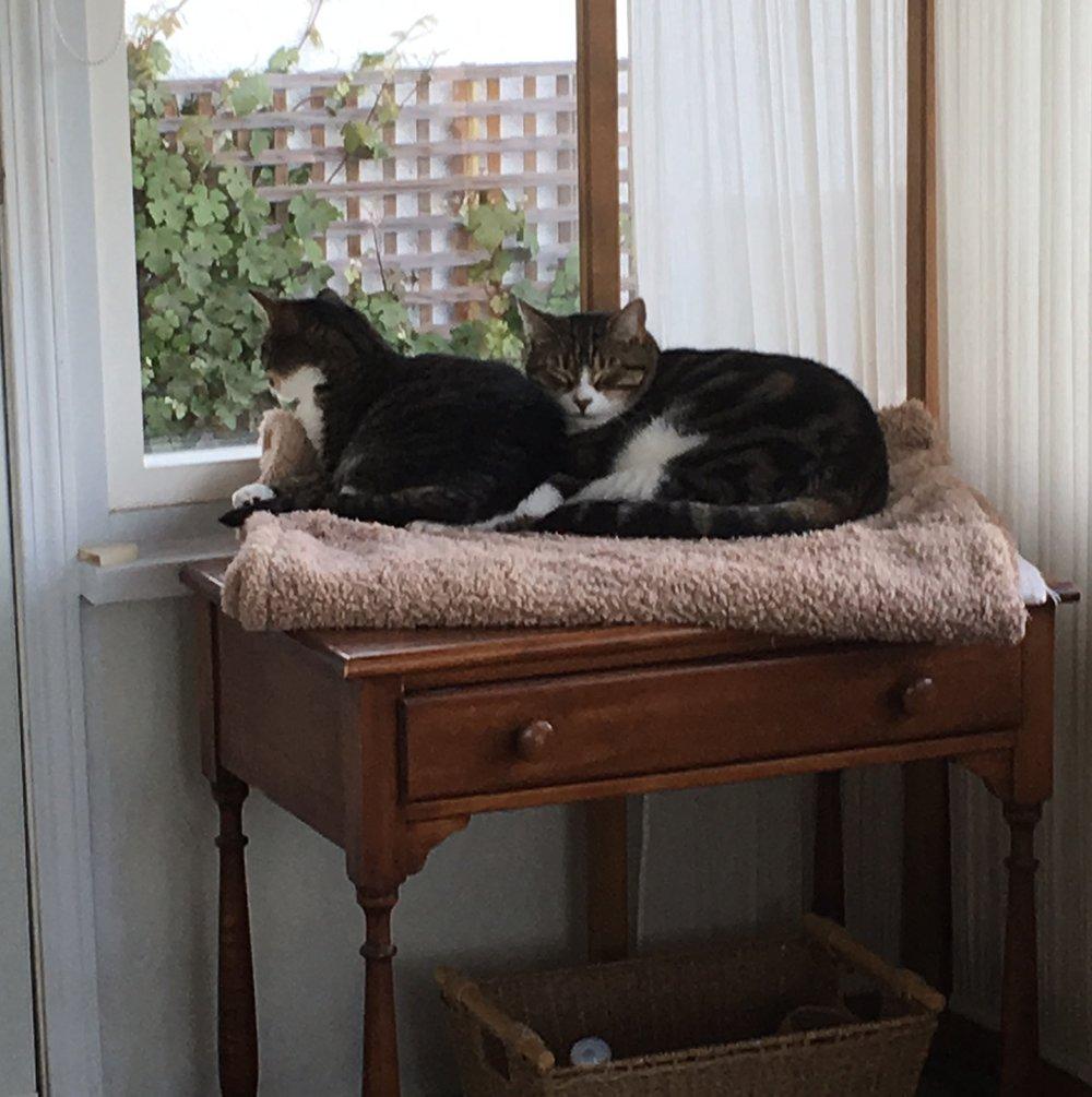 amelia and lily 2017.jpg