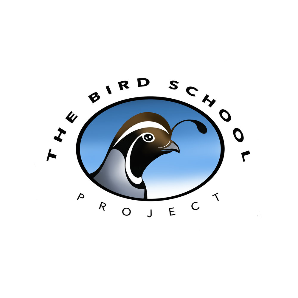 bird-school-4-site.jpg