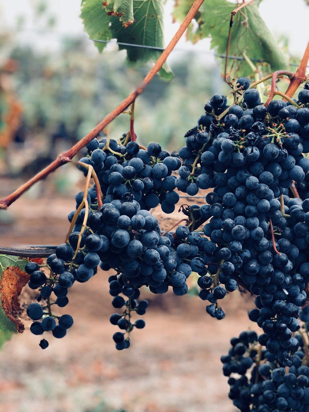 grapevine.jpeg