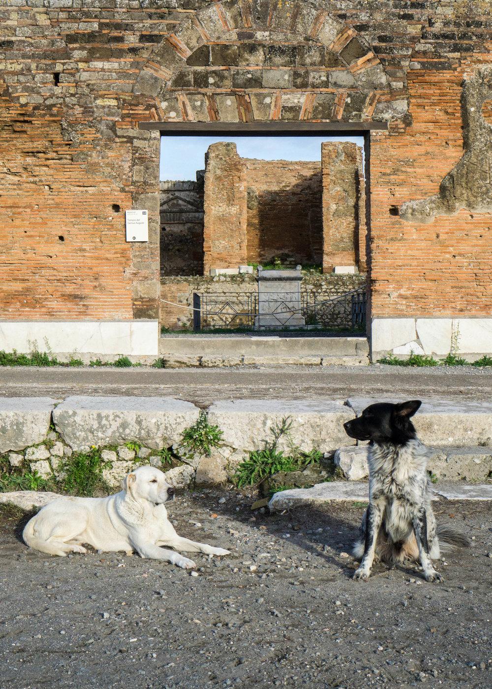 Dogs, Pompeii