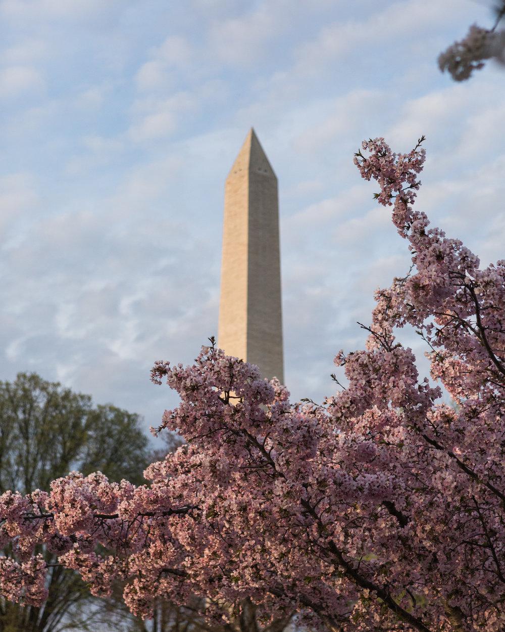 CherryBlossom-9.jpg