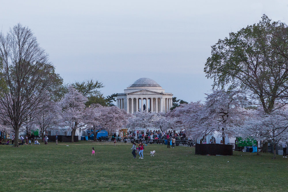 CherryBlossom-18.jpg