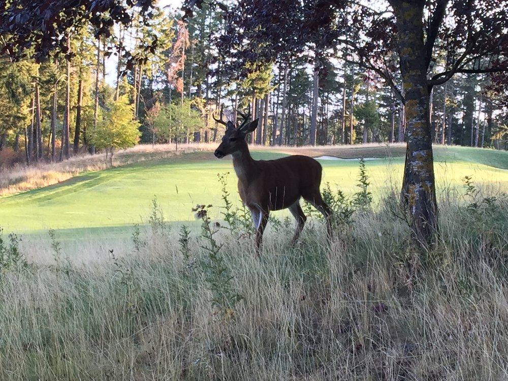 BM Mtn Deer copy.jpg
