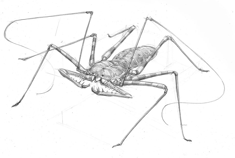 whipscorpion_drawing.jpg