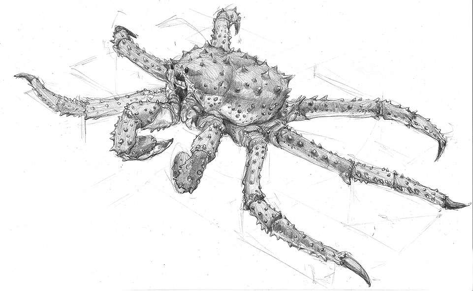 kingCrab_drawing.jpg