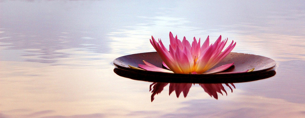 Flower floating on pond, symbolising relief, peace and stillness