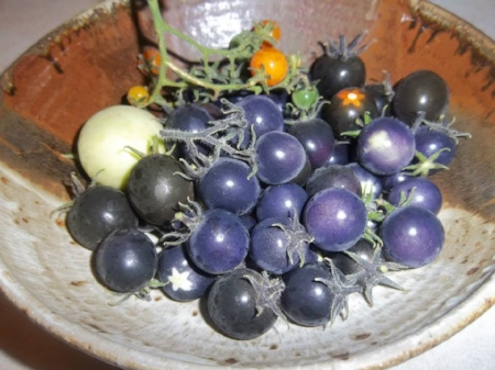 Organic Heirloom Tomato (Blue Purple Indigo Rose)