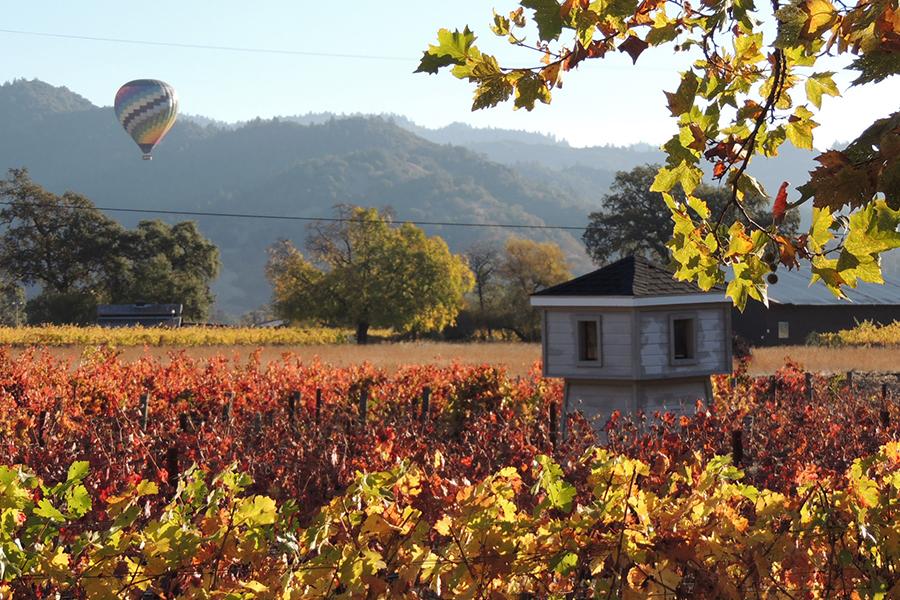 hot-air-balloon-art-workshop-napa-vineyard.jpg