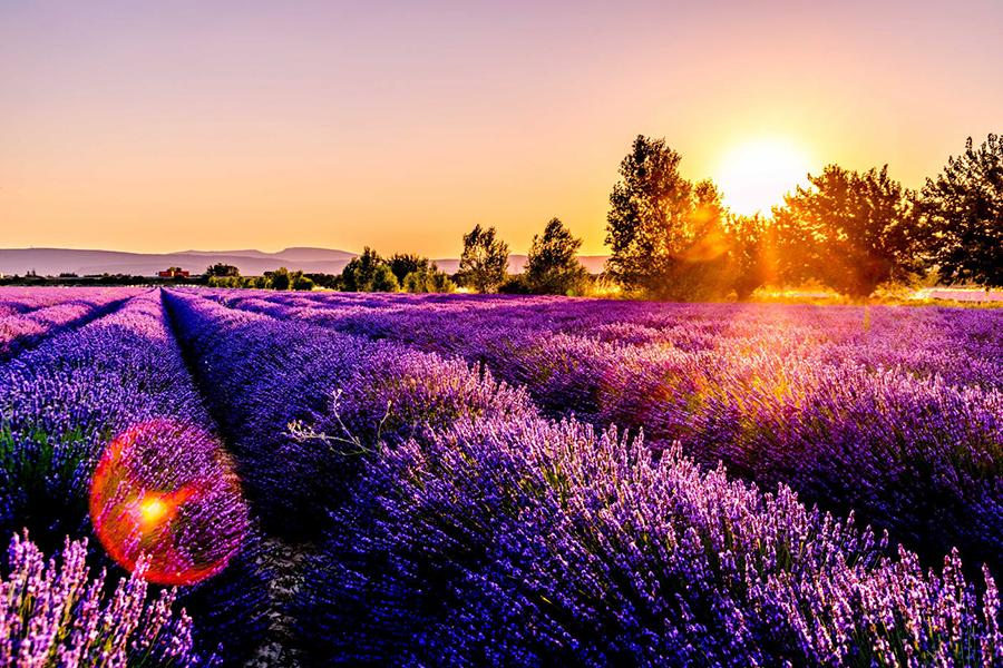 Ultra-Violet-pantone-2018-landscape-inspiration.jpg