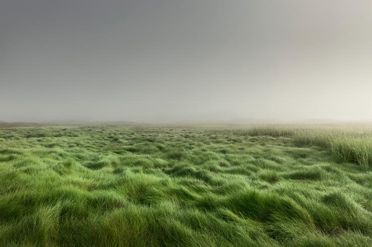 Moors Grass, Cprint, 39.5 x 55in, $7,500.jpg