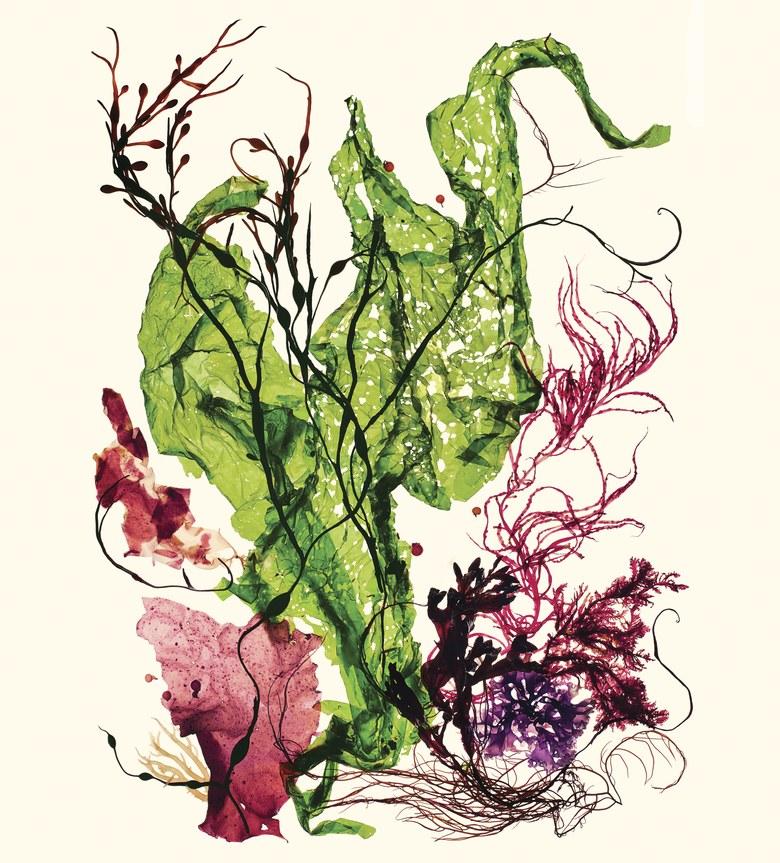 Vogue Seaweed.jpg
