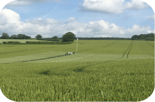 crop trials