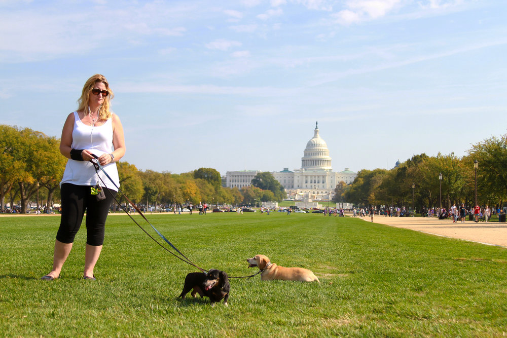 "Jacqueline Peterson walks her dogs Oliver, left, and Vivy, right, on the National Mall in front of the United States Capitol Oct. 20, 2016. ""It's Jacqueline, like Jacqueline Kennedy."""