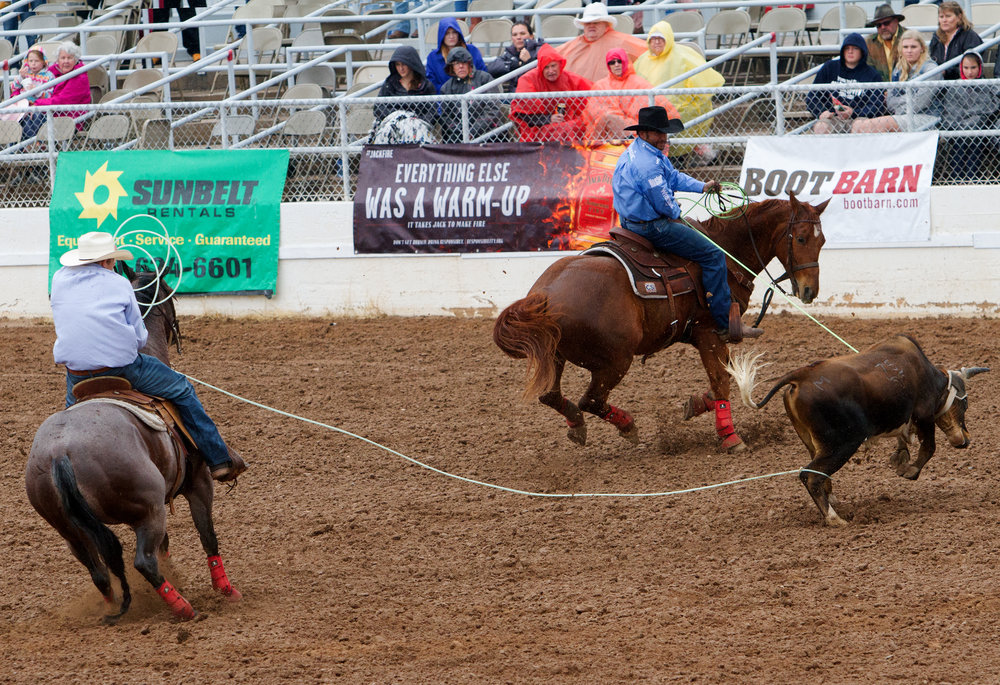 Roping duo Jim Ross Cooper from Stephenville, Texas, left, and Brandon Beers from Butte, Ore., right, lasso their bull during the team roping competition at the 92nd Annual La Fiesta de los Vaqueros' opening day on Saturday, Feb. 18 in Tucson, Ariz.