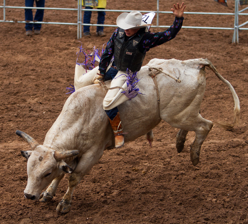 Bull rider Alex Guzman from Walnut Grove, Calif. hangs on tight to a bucking bull, Tumbler, during the bull riding competition Saturday, Feb. 18 at the 92nd Annual La Fiesta de los Vaqueros.