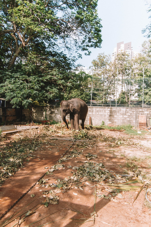 Sri_Lanka_Day1-71.jpg