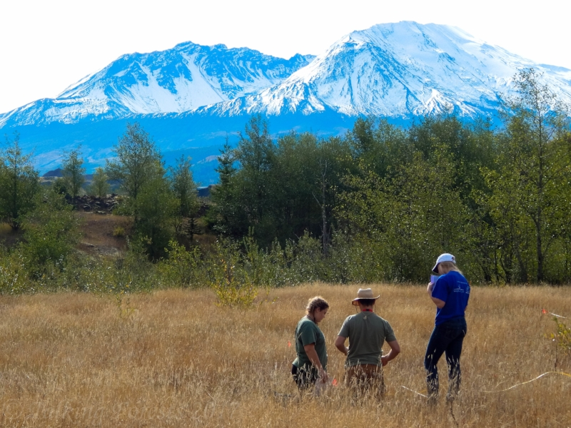 Plot survey in the terrestrial area of Mt. St. Helens.