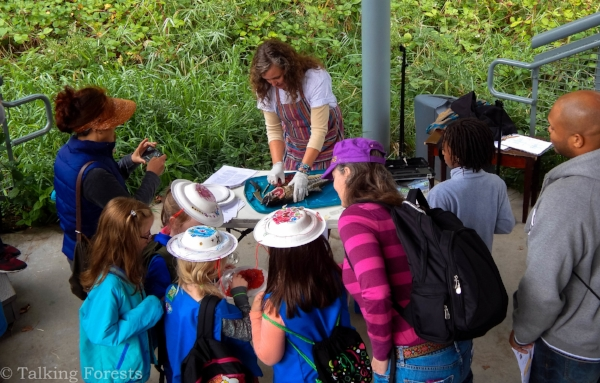Sheila Wilson showing children how ot dissect a fish at the Nisqually Watershed Festival
