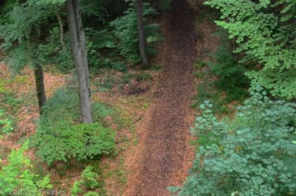 A view looking down on the tree top walk wooden path into the German forest floor. Photo Credit: Talking Forests