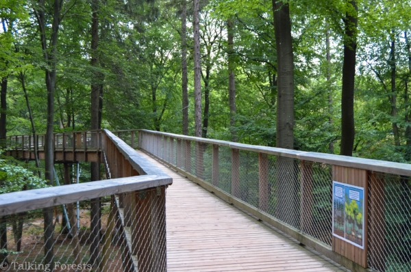 An easy ramp for anyone to enjoy this tree top walk! Photo Credit: Talking Forests