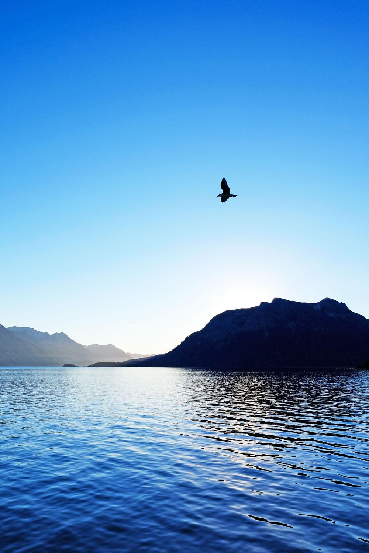 seagull-sunset-nahuel-huapi.jpg