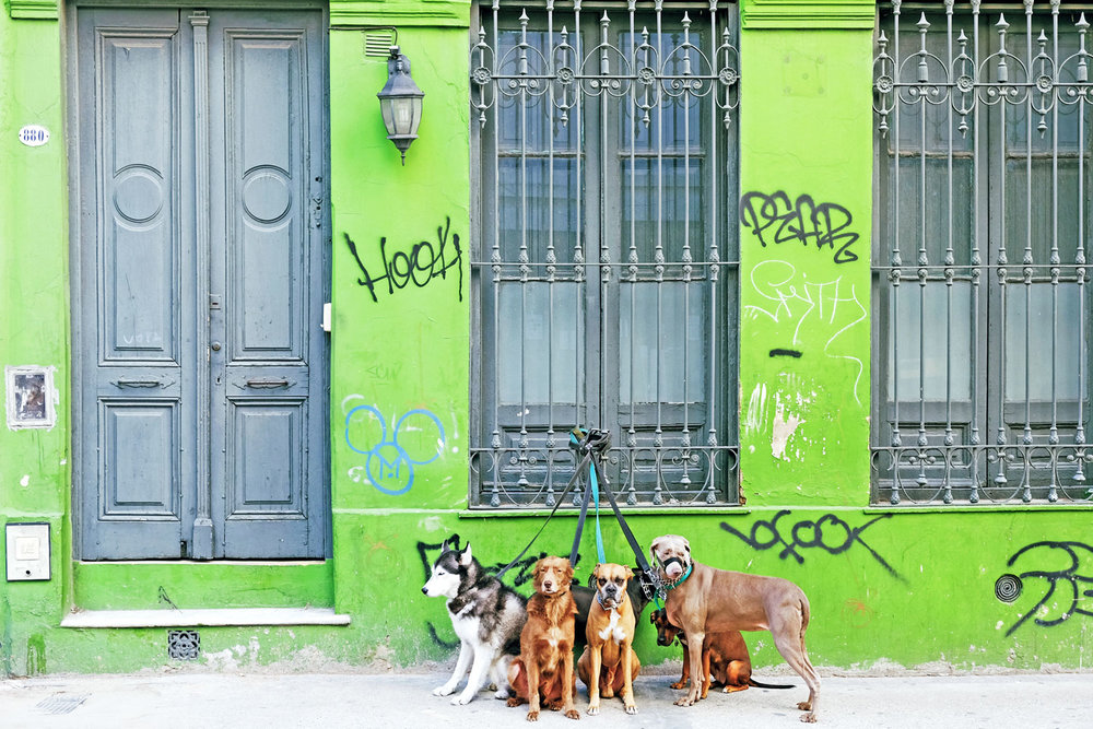 dog-walker-leashed-dogs-san-telmo-buenos-aires-argentina.jpg
