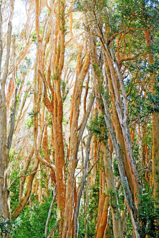 bosque-de-arrayanes.jpg