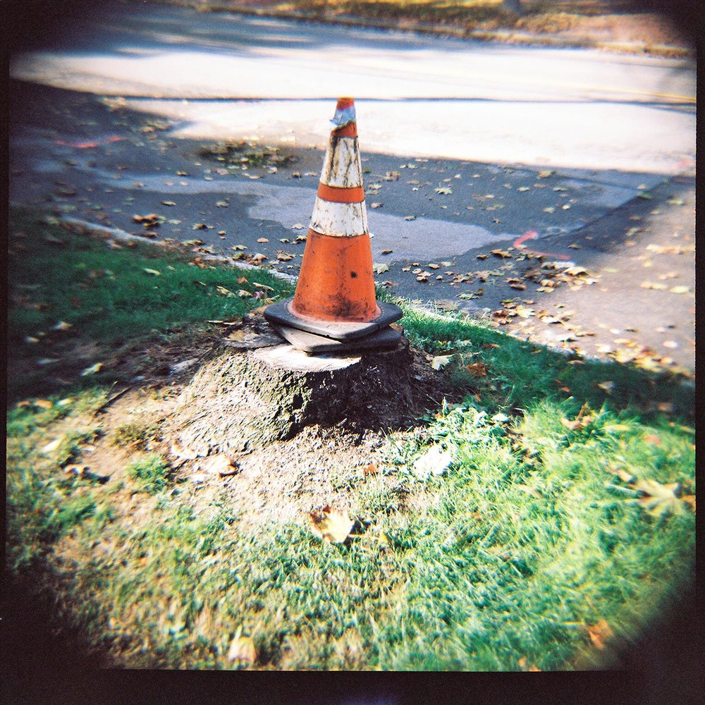 portland-traffic-cones-on-stump.jpg