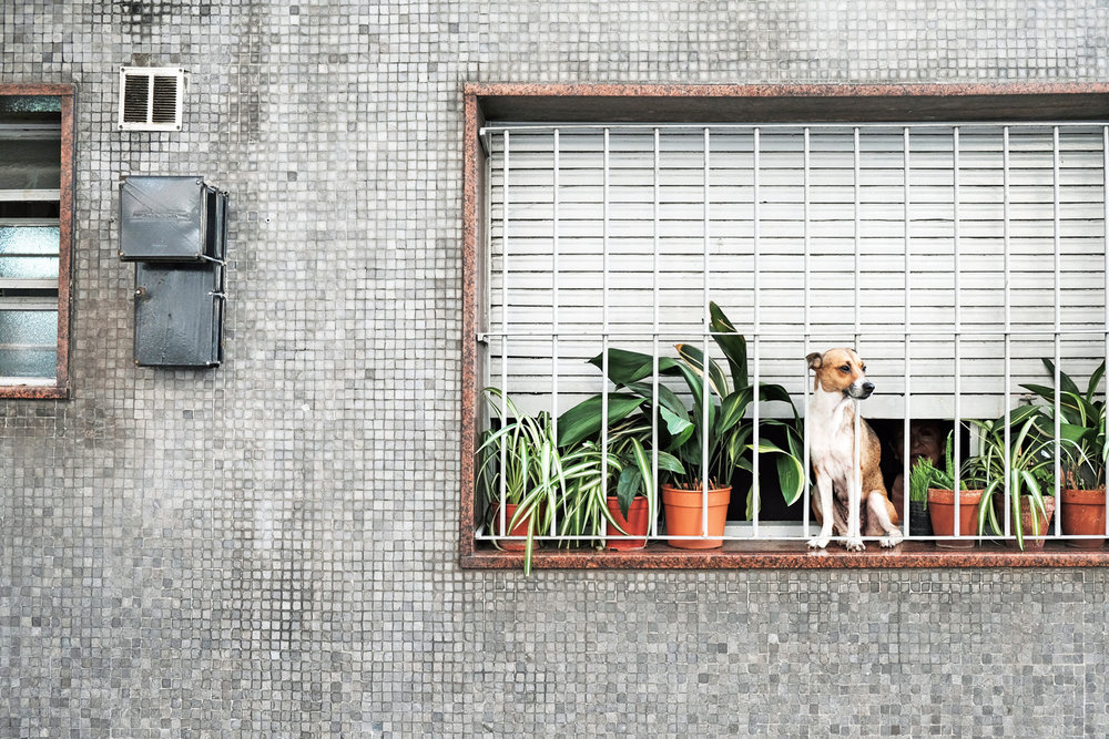 dog-perches-in-window-to-watch-buenos-aires-argentina.jpg