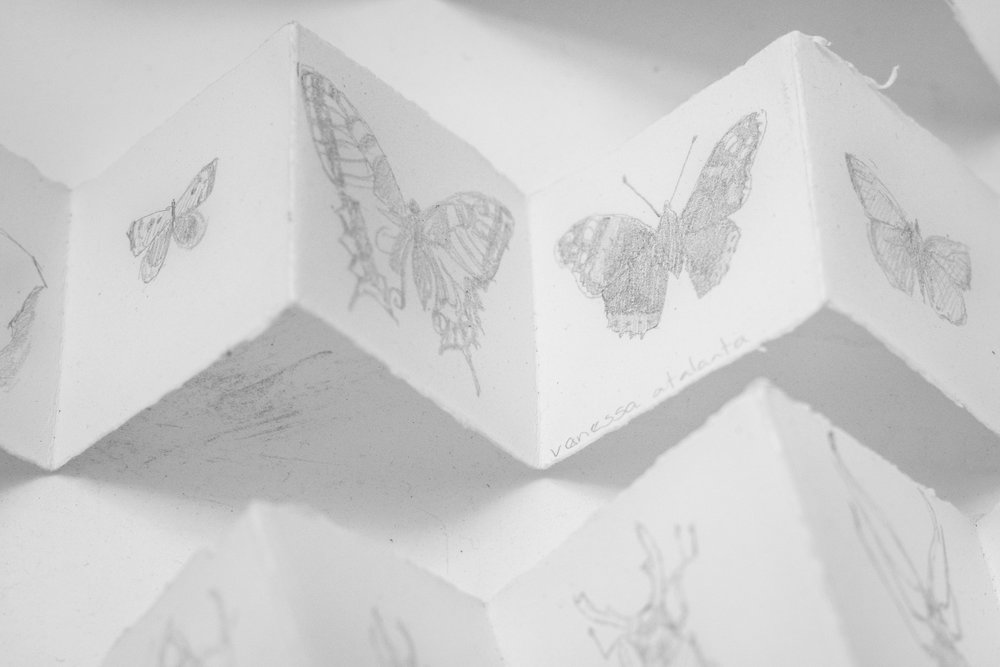 Sketches_Butterflies