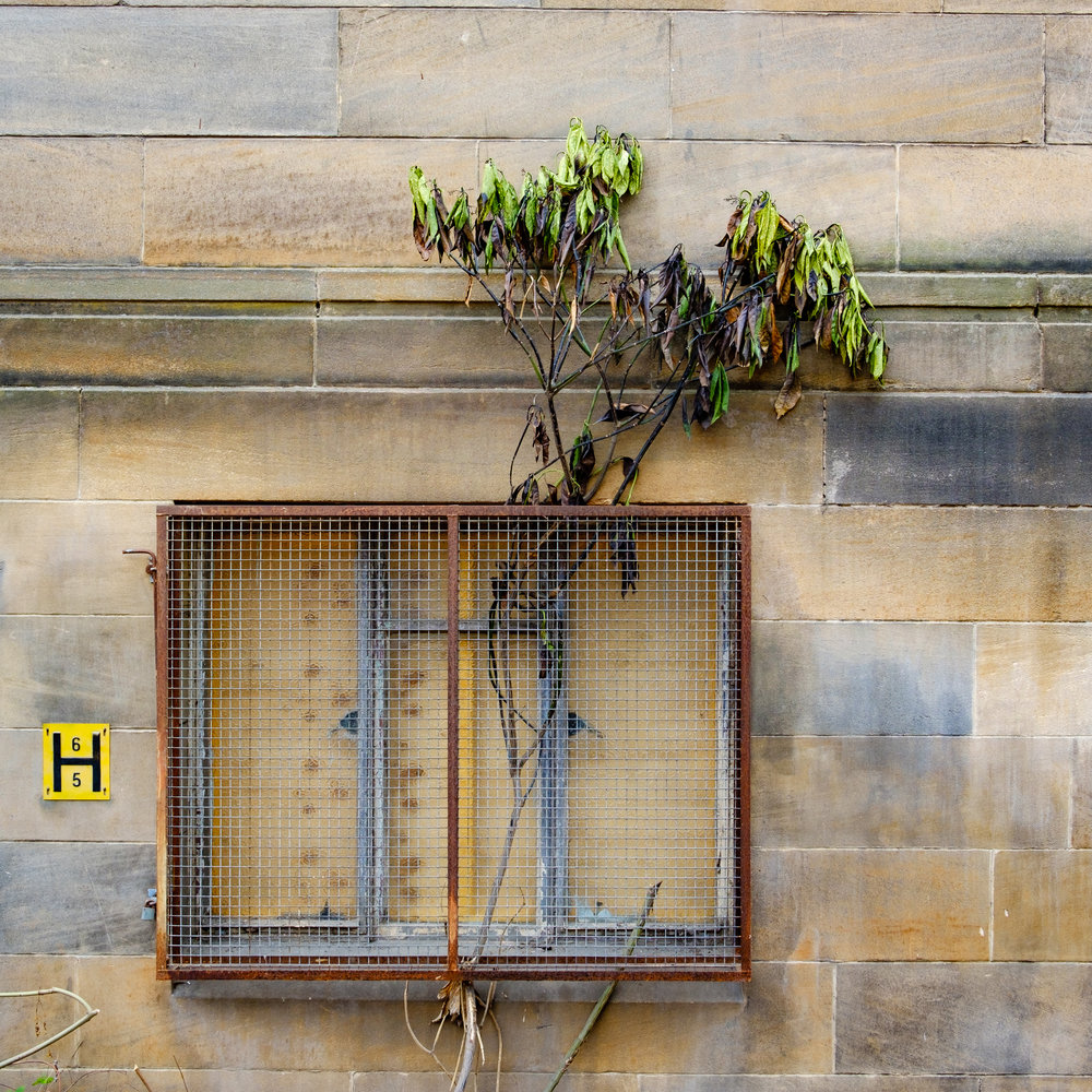 abandoned building in Glasgow with tree