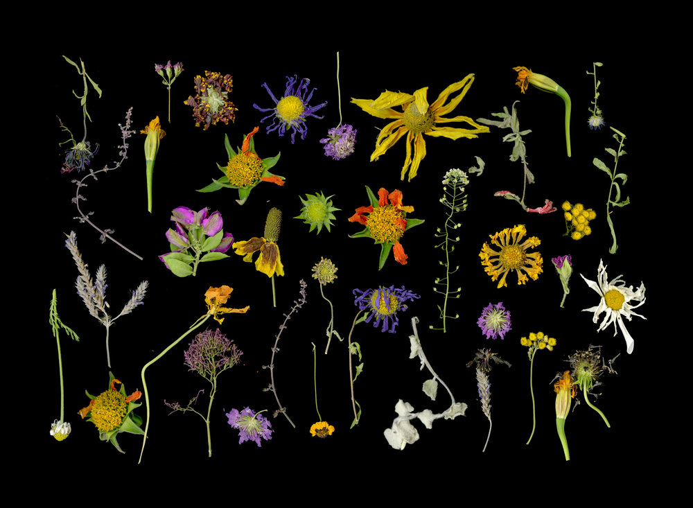 exhaustedflowers_5x7.jpg