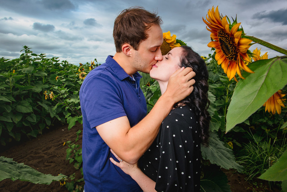 Sunflower farm engagement shoot _ Johnson's Locust Hall Farm _ Jobstown NJ-13.jpg