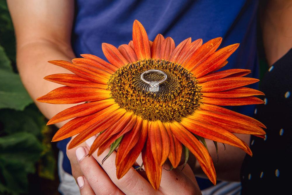 Sunflower farm engagement shoot _ Johnson's Locust Hall Farm _ Jobstown NJ-17.jpg