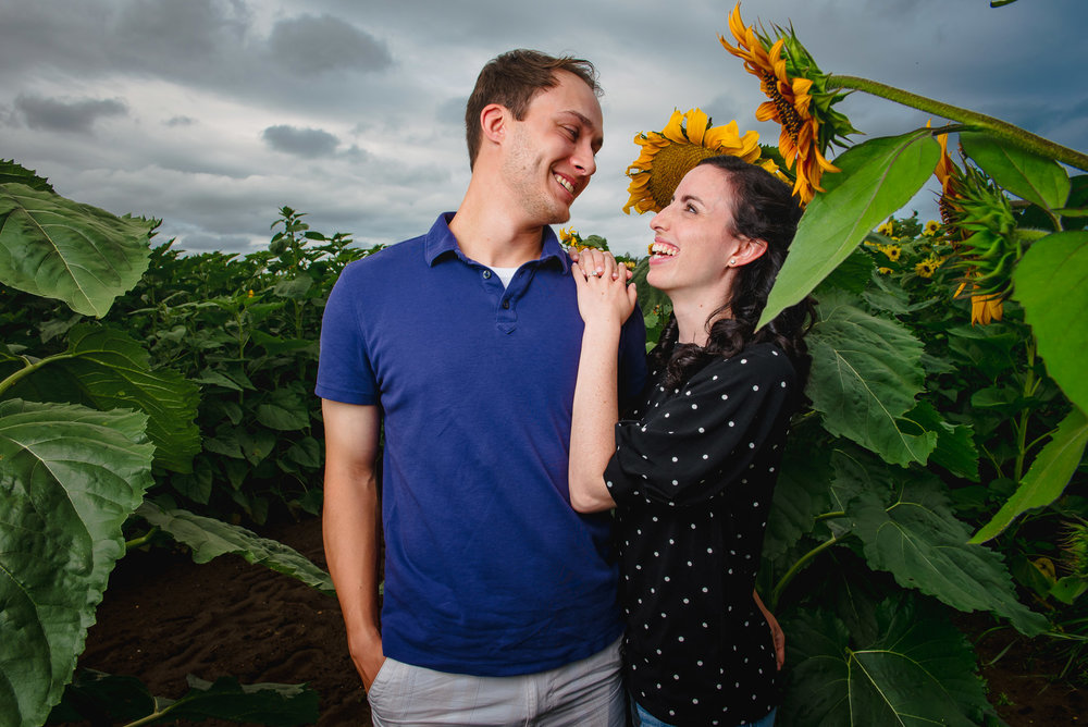 Sunflower farm engagement shoot _ Johnson's Locust Hall Farm _ Jobstown NJ-25.jpg
