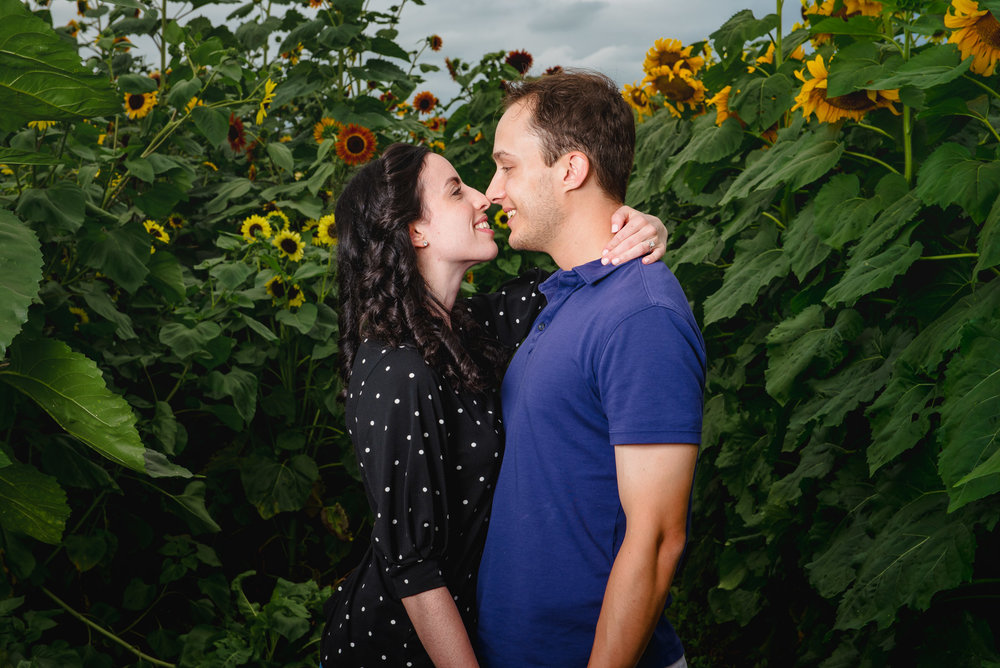 Sunflower farm engagement shoot _ Johnson's Locust Hall Farm _ Jobstown NJ-31.jpg