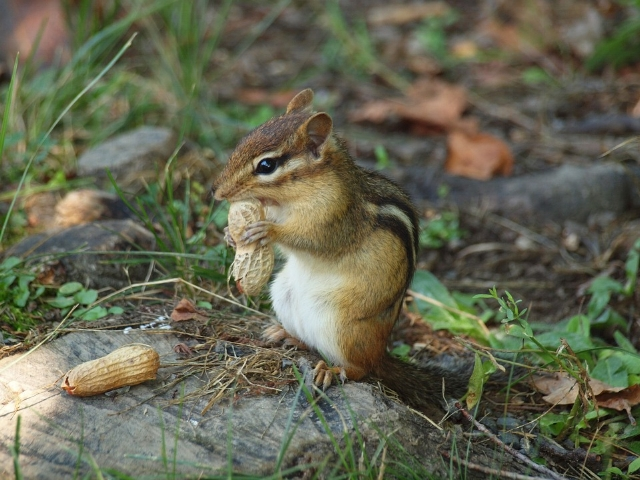 Please do not crack nuts open with your teeth unless you're a chipmunk or a squirrel.
