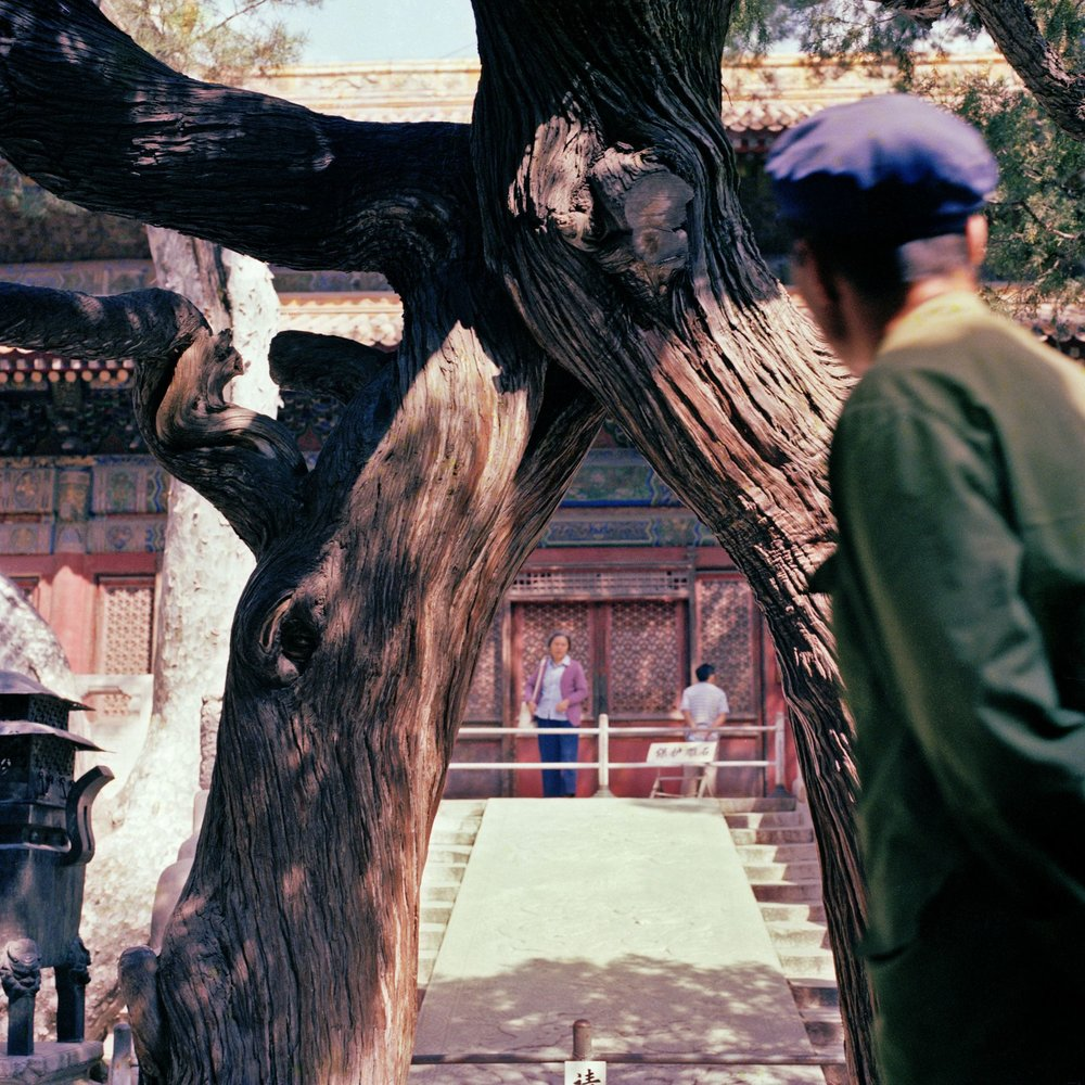 Joint Tree, Beijing, 1980's