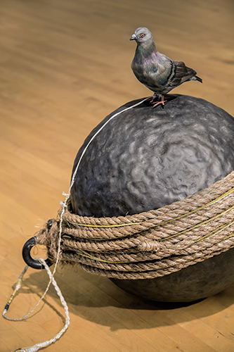 dyad pigeon on ball close.jpg