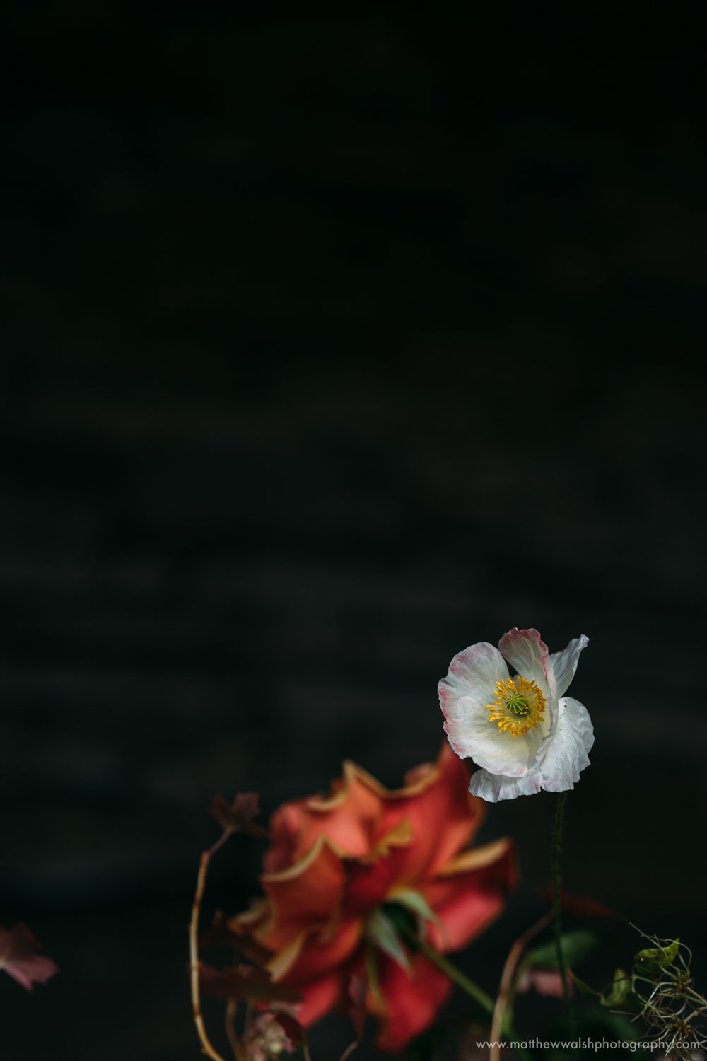 A delicate flower against a hard dark backdrop