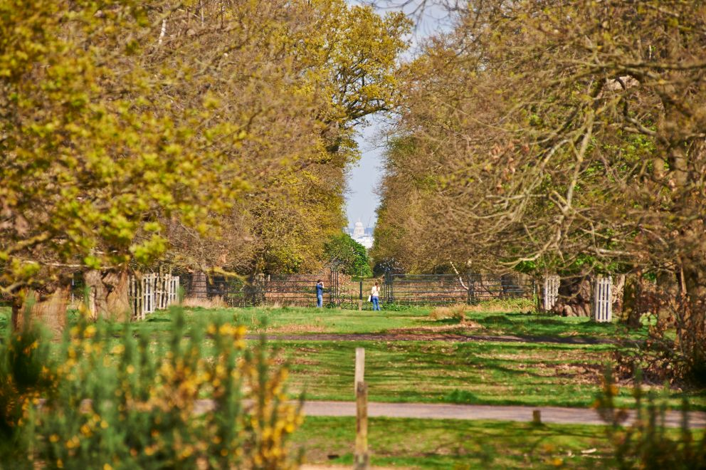 For more info visit: https://www.royalparks.org.uk/parks/richmond-park/visitor-information