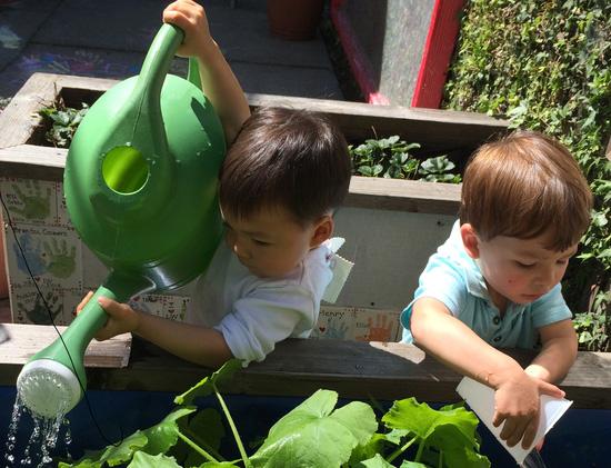 boys-garden-550x421.jpg