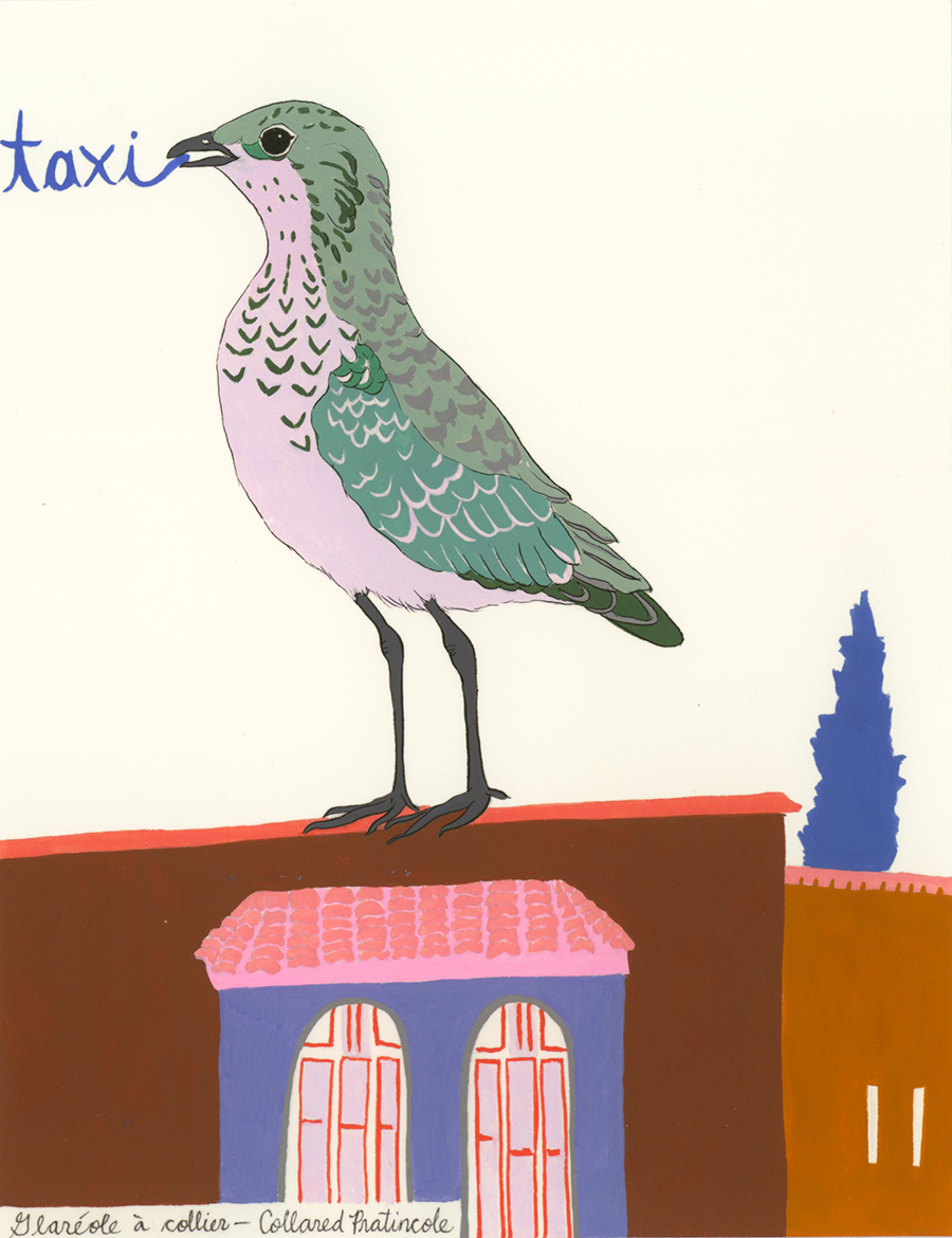 Taxi , from the series of 358  Birds of North Africa Speak French and English Both at Once , 2005, gouache and ink on Arches paper