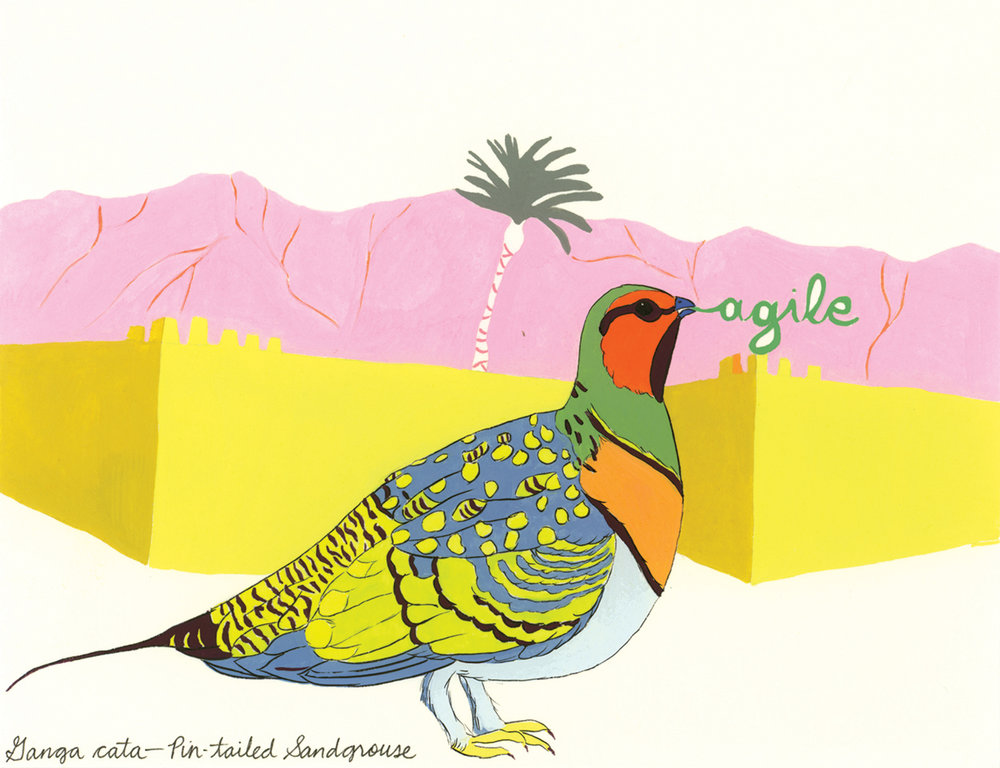 Agile , from the series of 358  Birds of North Africa Speak French and English Both at Once , 2005, gouache and ink on Arches paper