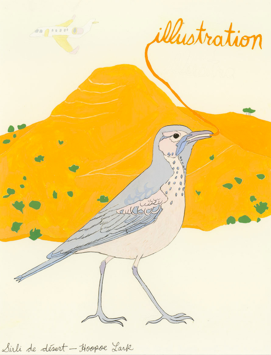 Illustration , from the series of 358  Birds of North Africa Speak French and English Both at Once , 2005, gouache and ink on Arches paper
