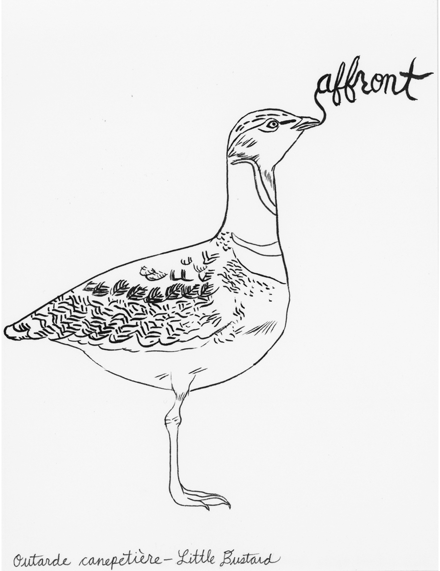 Affront , from the series of 358  Birds of North Africa Speak French and English Both at Once , 2005,ink on Arches paper