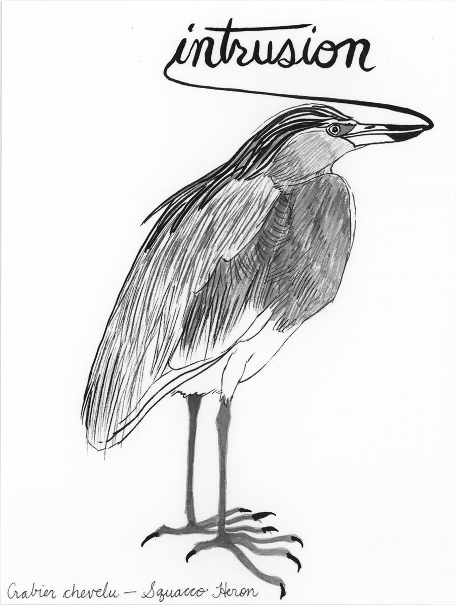 Intrusion , from the series of 358  Birds of North Africa Speak French and English Both at Once , 2005, gouache and ink on Arches paper